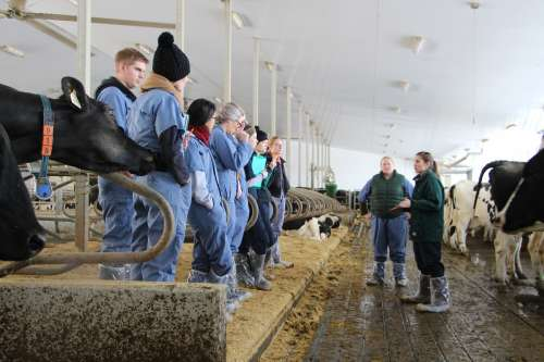 Students in overall inside a dairy barn