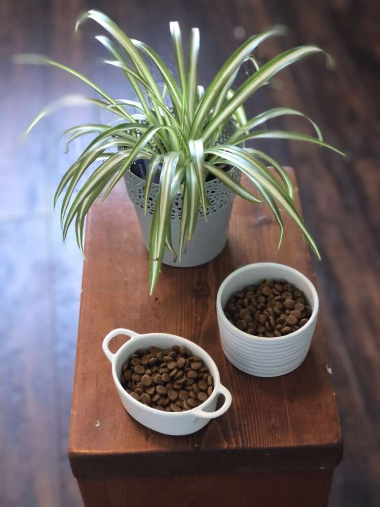 Photo shows a small table with a plant and two bowls filled with cat kibble.